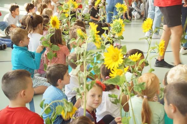 Bilder Sonnenblume